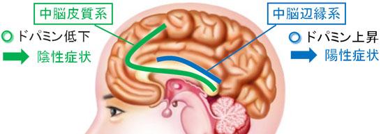 「中脳辺縁系ドーパミン神経」の画像検索結果