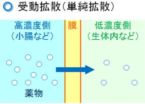 受動拡散(単純拡散)と能動輸送