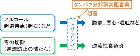 フオイパン(カモスタット)の作用機序:タンパク分解酵素阻害薬
