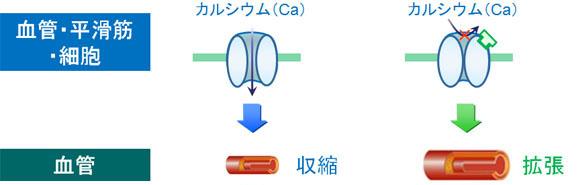 禁忌 薬 カルシウム 拮抗