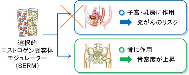 エビスタ(ラロキシフェン)の作用機序:骨粗しょう症治療薬