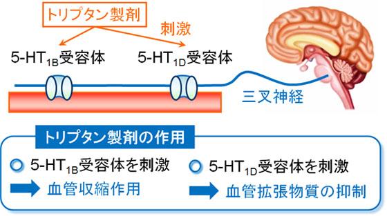 トリプタン エレ レルパックス(エレトリプタン)の作用機序:片頭痛治療薬